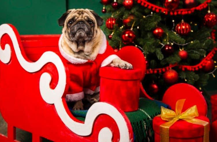 Content Marketing Weihnachten Social Media