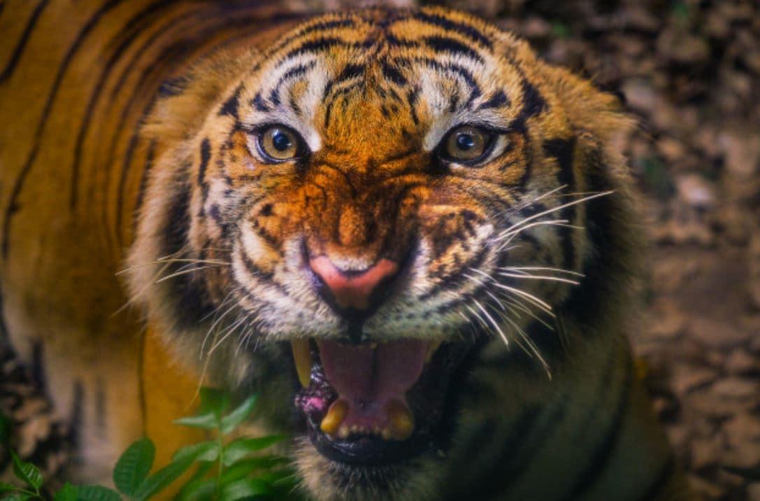 Zooliste für Fotos und Videos