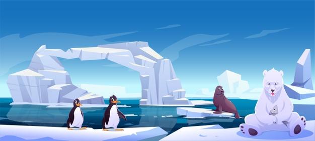 Pinguin und Contenteisbär