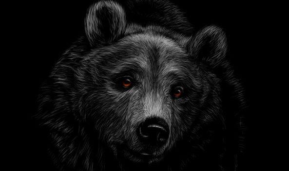 Contentschwarzbär im dunkeln